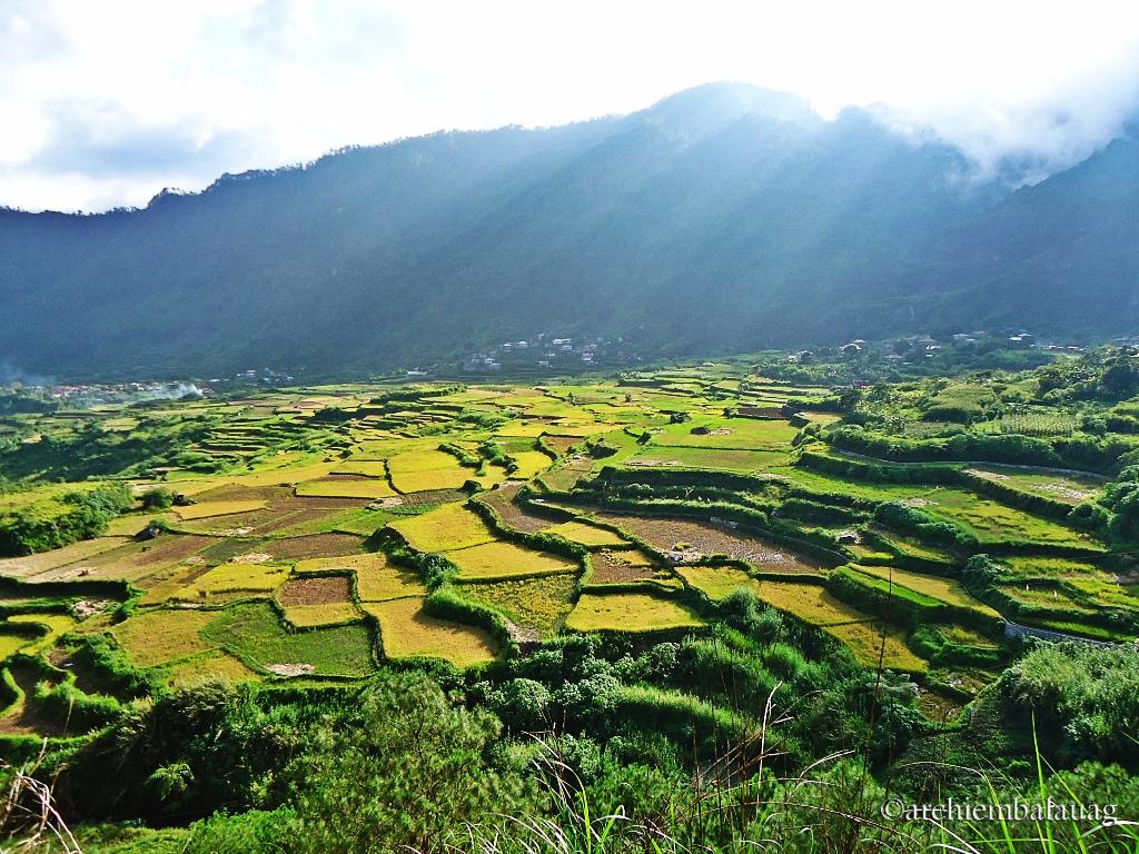 Kapay-Aw Rice Terraces Sagada, June 2013